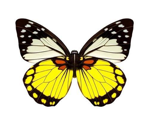 49 Decorative Wafer Paper Butterflies 30mm Pre Cut Edible ...